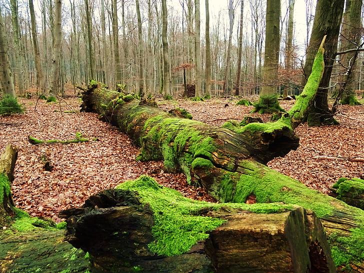 forest, walk, moss