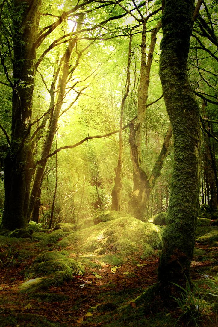 meža, izcirtums, rudens, sūna, meža biezoknī