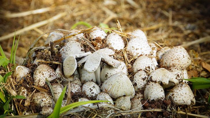 mushroom, nature, white, pa, park, harvest