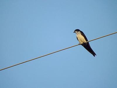 birdie, bird, swallow
