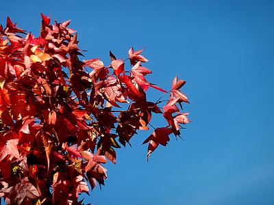 υποκατάστημα, αισθητική, δέντρο, φύλλα, Δρυς, φύλλο βελανιδιάς, δρύινα φύλλα