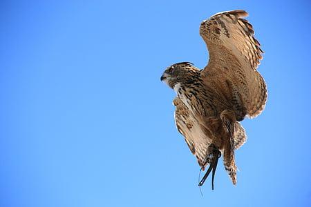 올빼미, 독수리 올빼미, 새, 동물, 활성 밤, 새 들, 깃털
