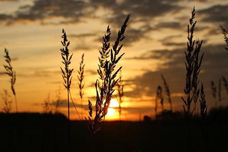 solen, solnedgång, kvällshimmel, gräs, abendstimmung, Sky, nedgående solen