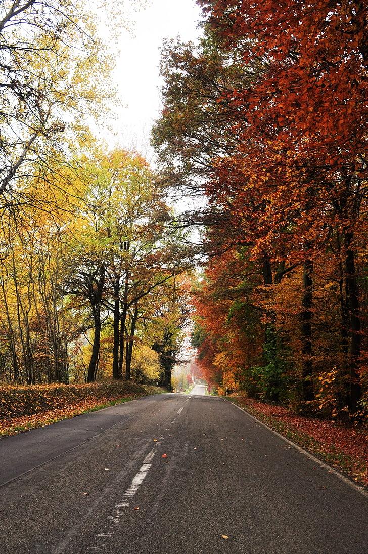carretera, tardor, paisatge de tardor, paisatge, natura, bosc, arbres