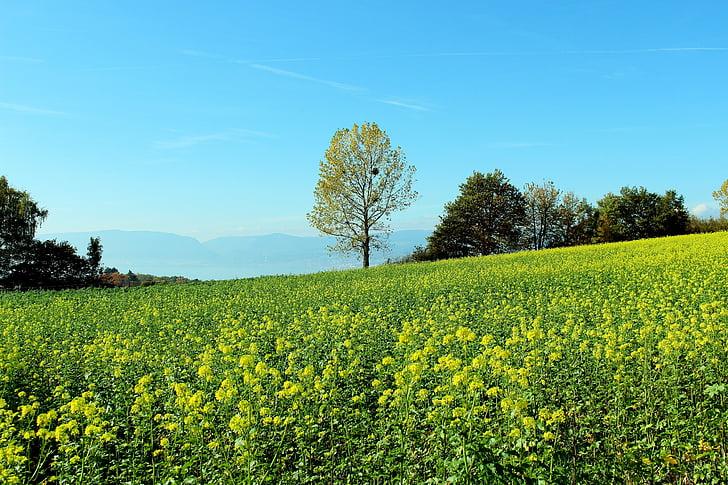 Пролетна поляна, цвете поляна, пейзаж