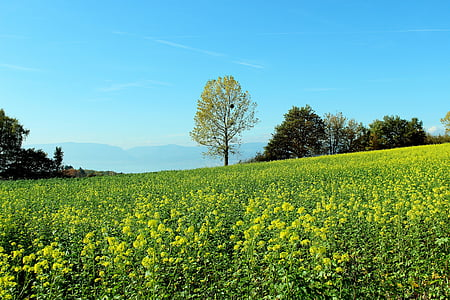 våren voll, blomst ENG, landskapet
