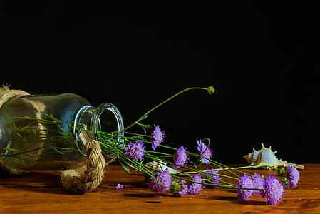 bodegones, Stilleven, licht, Kleur, fles, Bladeren, bloem