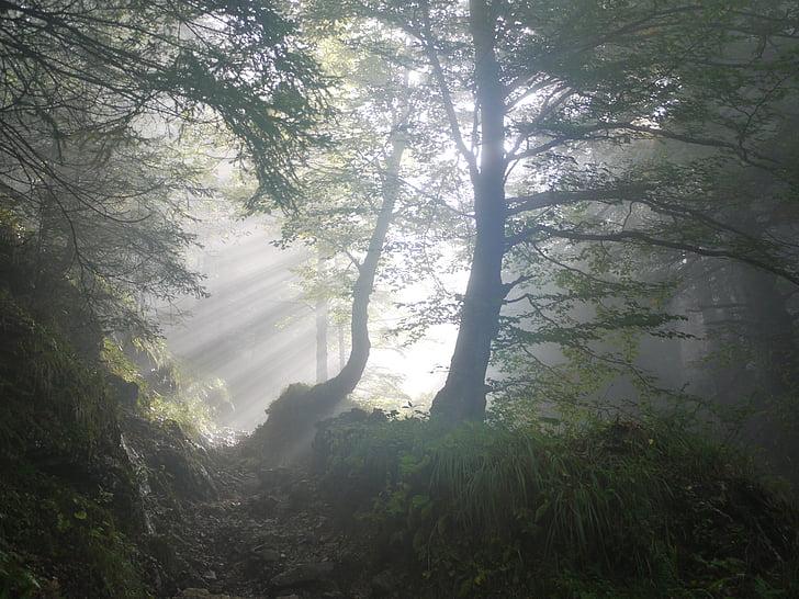augment, matí, boira, Sunbeam, mística, a primera hora del matí, estat d'ànim