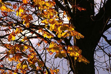 tardor, estat d'ànim tardor, fulles, arbre, tardor daurat, groc, bosc