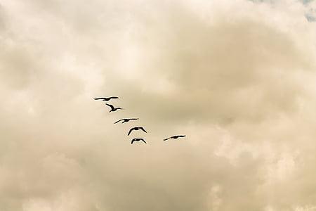 birds, animals, sky, clouds
