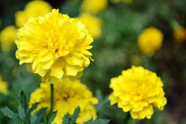 Cveće - Page 21 Yellow-flower-flowers-garden-flowers-small-flowers-preview