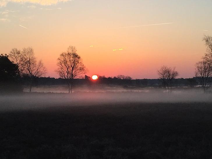 morgonsolen, naturen, landskap, solnedgång, träd, skymning, Utomhus