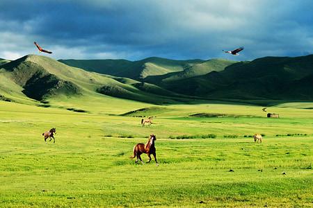 Преъри, степи, планини, растителност, природата, птици, лети