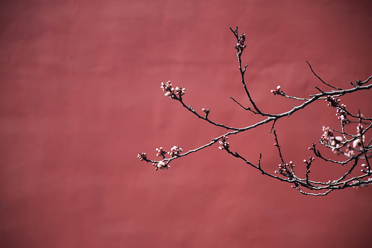 red, plum blossom, the national palace museum