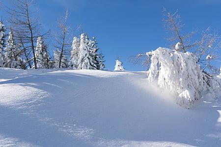 hivernal, neu, Nadal, desembre, bosc cobert de neu, l'hivern, natura