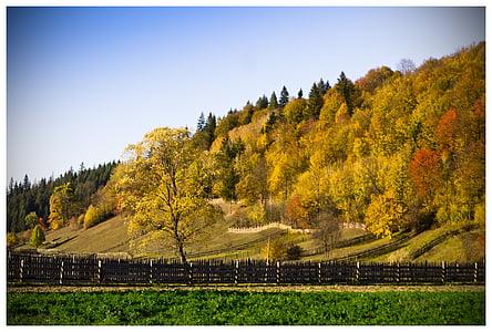 drevo, gozd jeseni, jeseni, spadajo listi, oktobra, zlati