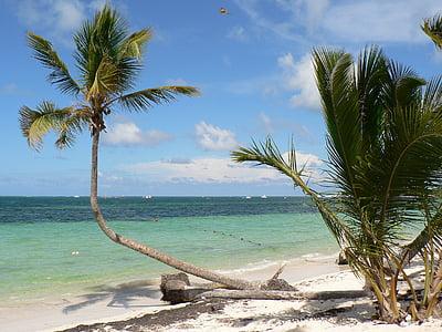 República Dominicana, Punta cana, platja, coco, Mar, vacances, paradís