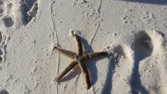 estrella de mar, oceà, Mar, l'aigua, l'estiu, natura, platja