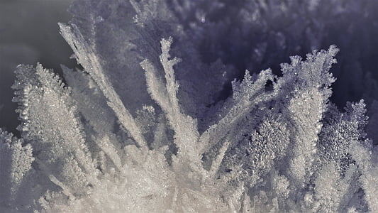 winter, snow crystal, snow, frozen, cold, frosty, macro