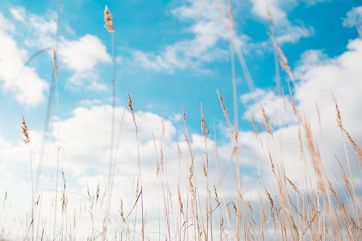 gras, hay, summer, blue, nature, sky, meadow