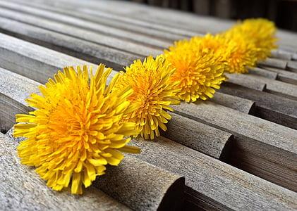 Regrat, plevela, pomlad, rumena