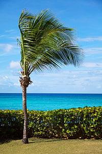 пляж, Красивий, синій, узбережжя, краєвид, океан, Palm