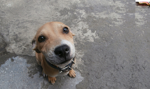 dog, pet, animals, dogs, pets, animal, cute