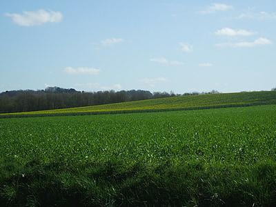 Prada, primavera, els camps, prats verds, Prat, camp, bosc