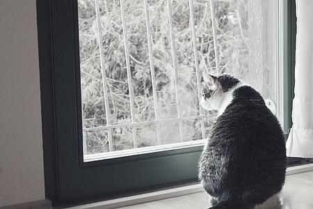 cat, white, animal, pet, black, white cat, curious