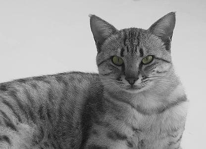 cat, animal, cat eye, animal portrait, animals