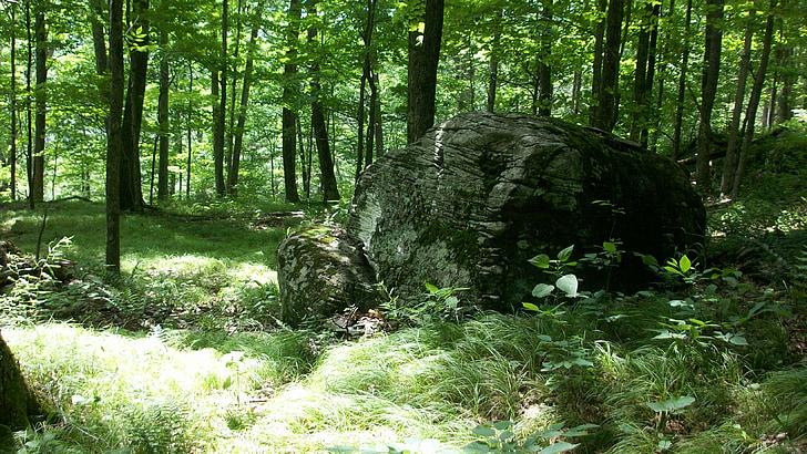 rock, boulder, forest, woods, nature, stone, woodland