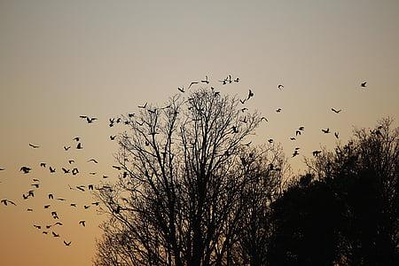ocells, eixam, ramat d'ocells, cavar, sortida