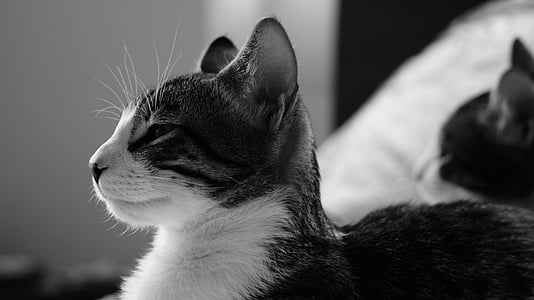 cat, black and white, cats, feline look, domestic Cat, pets, animal