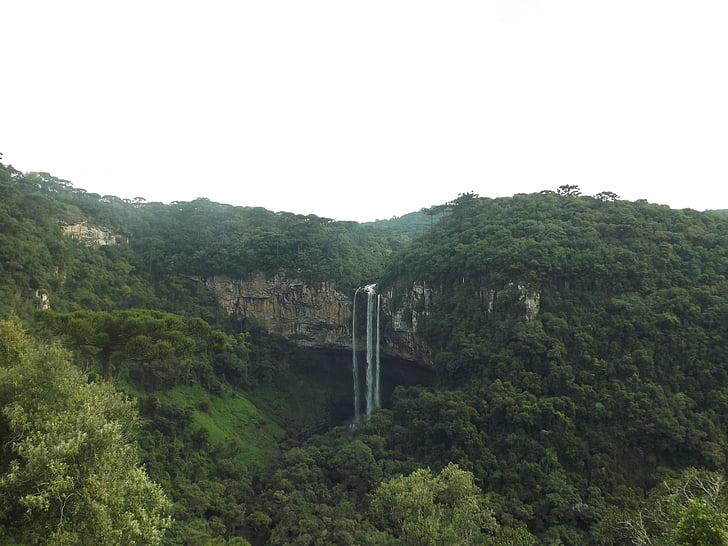 Gamta, džiunglės, Cinamonas, Brazilija, krioklys, atogrąžų miškų, mato