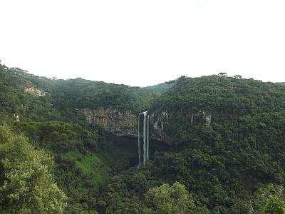 natura, Selva, canyella, Brasil, cascada, bosc tropical, Mato