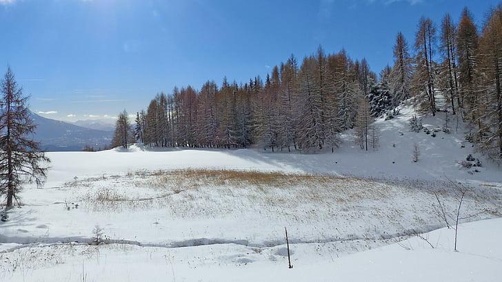 krajolik, Zima, snijeg, zimski krajolik, priroda, ariš, snježne krajolik
