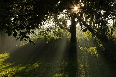 solen, morgon, landskap, naturen, dimma, stigande solen, ljus