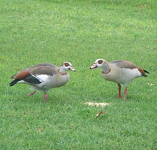 ocells, vida silvestre, falta