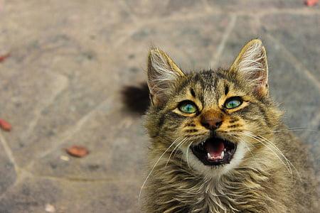 animal, pet, cute, kitten, cat, domestic Cat, pets