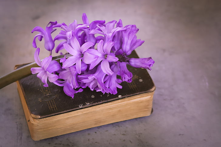 bunga, wangi bunga, merah muda, bunga, bunga merah muda, bunga, bunga musim semi