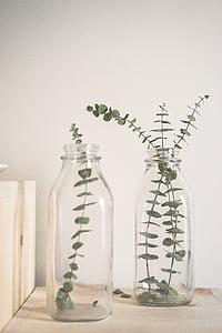 2 つ, クリア, ガラス, ボトル, 植物, 薬と健康管理, 代替医療