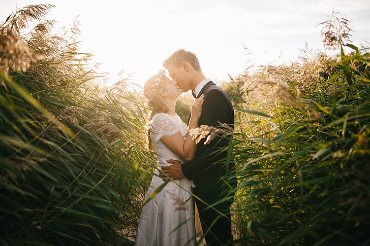 núvia, parella, herba, nuvi, petons, l'amor, matrimoni