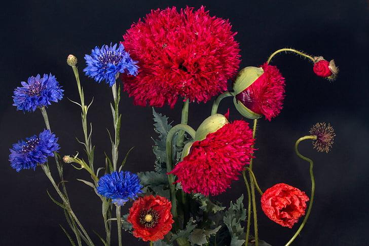 korenbloemen, klatschmohn, klaproos bloem, Wild flower, klaproos tuin