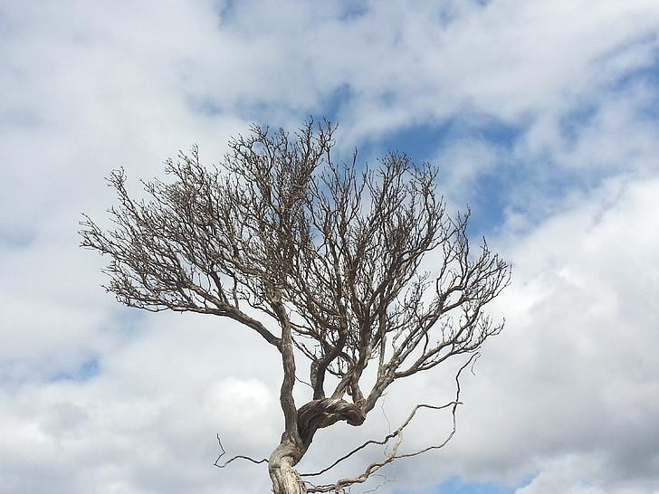 arbre, farigola, núvols, natura, l'hivern