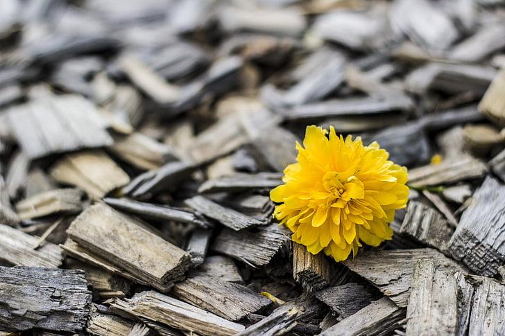 geltona, gėlė, medienos, Gamta, Žiedlapis, fonai, mediena - medžiaga