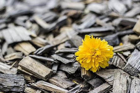 kollane, lill, puit, loodus, kroonleht, taustad, puit - materjal