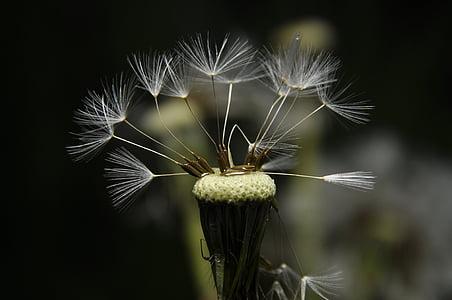 flower, garden, nature, meadow, water, a drop of, drops
