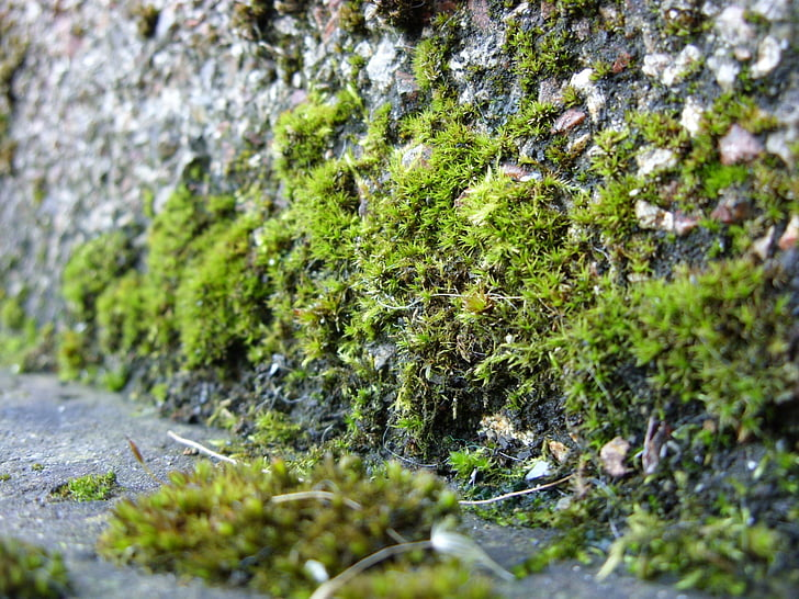 moss, mosses, growing, plant, green, stone wall, texture