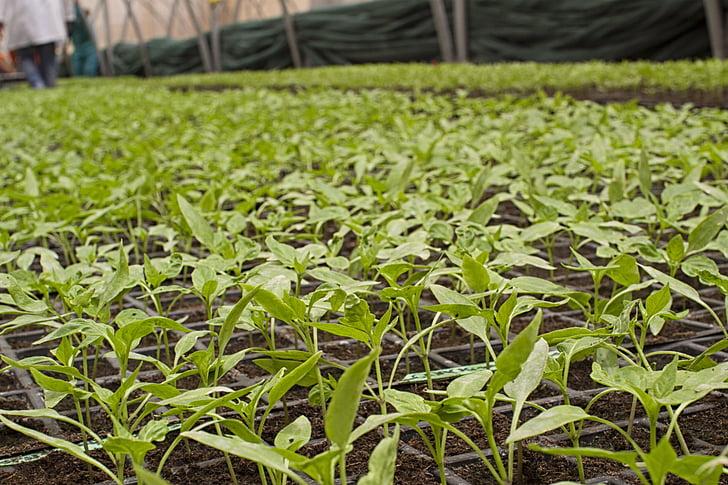 žemės ūkis, Bio, ūkio, galia, daržovės, žemės ūkio, valstiečių