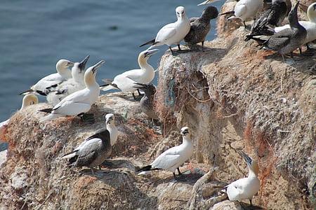 breeding birds, nature, nesting place, breed, nest, bird, animal